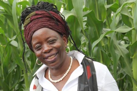Sekai AA Zimbabwe Murehwa crop
